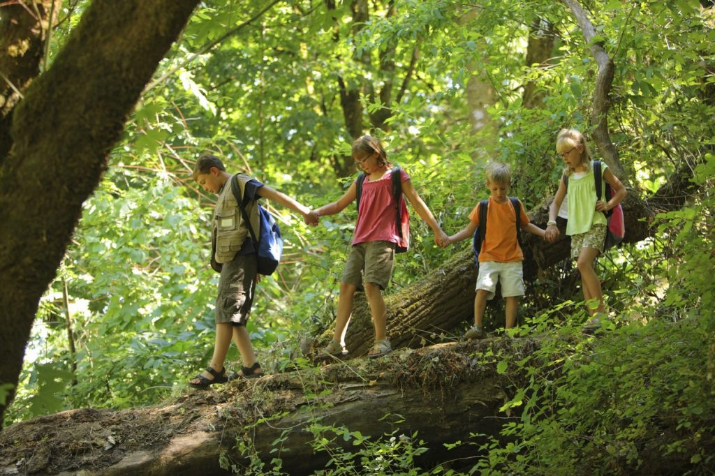Patapsco State Park: A Guide To Maryland's Hiking Spot