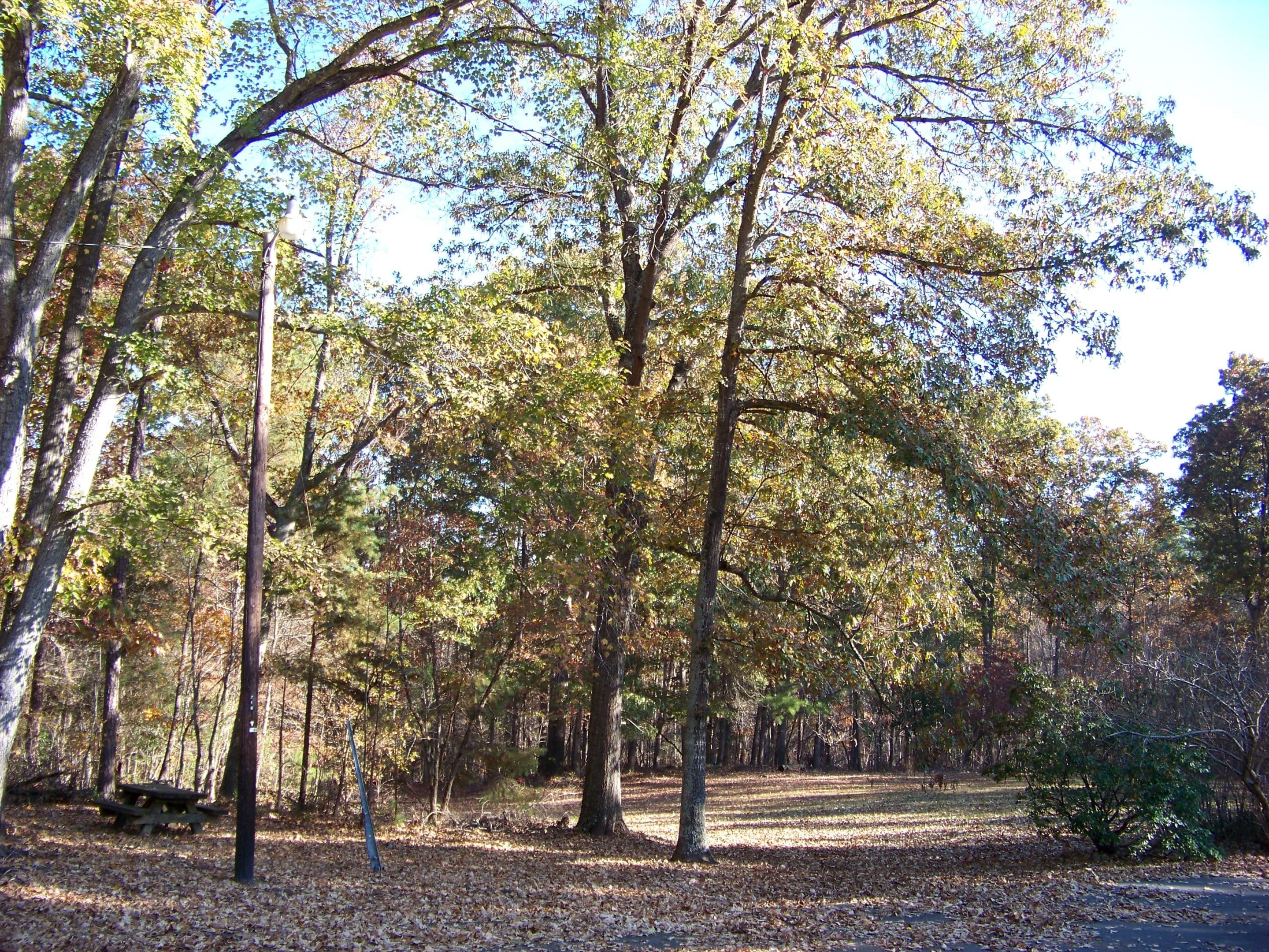 Trees in Uwharrie National Forest